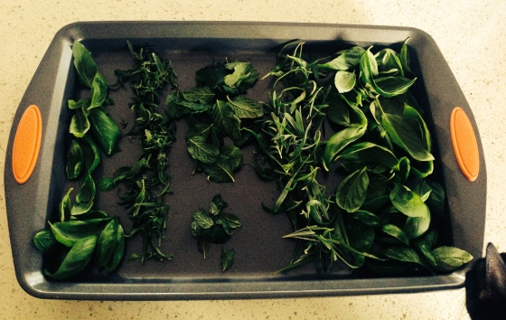 All the herbs I picked from my garden this morning.